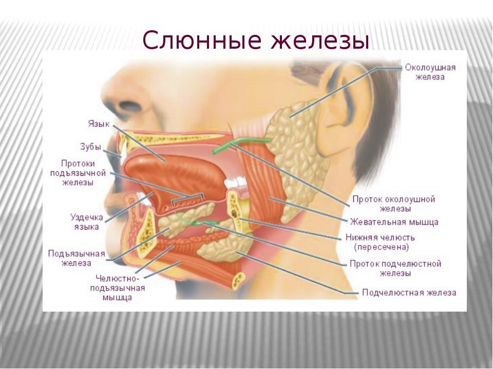 Сиалоаденит